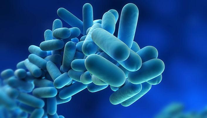 Legionellen (Legionella)