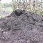 Wenn Erde krank macht: wühlen in Kompost-Erde kann krank machen